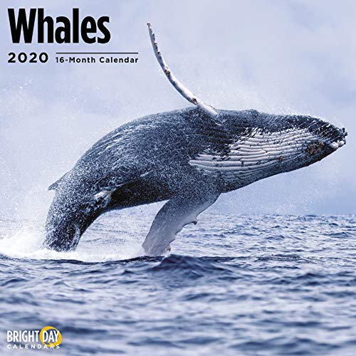 Whales Wall Calendar 2020 by