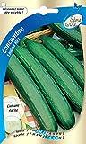 Sème la vie Graine Concombre Louisa Hf1 Vert 10 x 0,2 x 16,5 cm