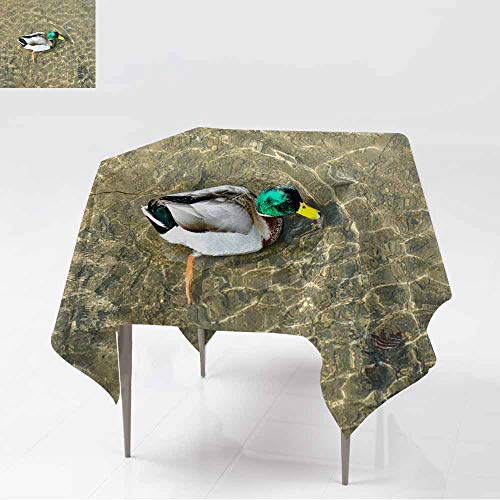 AFGG Resistant Table Cover,Male Mallard Duck (Drake) Swimming,Party Decorations Table Cover Cloth,60x60 Inch