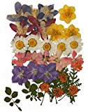 Pressed flowers mixed pack, columbine, daffodils, larkspur, Queen Ann's lace, rose leaves, foliage