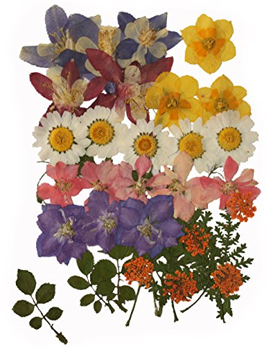 Pressed flowers mixed pack, columbine, daffodils, larkspur, Queen Ann's lace, rose leaves, (Pressed Flowers)