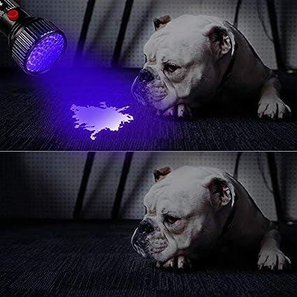 Morpilot Upgrade Best 395nm Ultraviolet Blacklight for Detect Bed Bug Dog Urine Stain Scorpion 51 LED UV Flashlight Pet Urine Stain Detector 2 Pack
