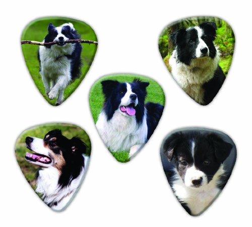 border-collie-dog-5-loose-guitar-picks