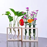 Feiren indoor/Outdoor Wall Hanging Plant Test Tube Flower Bud Vase in Wooden Stand - house plant community/house plant club/summer plant gang