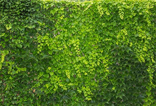 GoEoo 10x8ft Spring Vibrant Boston Ivy Wall Vinyl Photography Background Hedge Living Fence Topiary Foliage Backdrop Spring Scenic Landscape Wallpaper Theme Party Banner Studio
