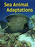 Sea Animal Adaptations