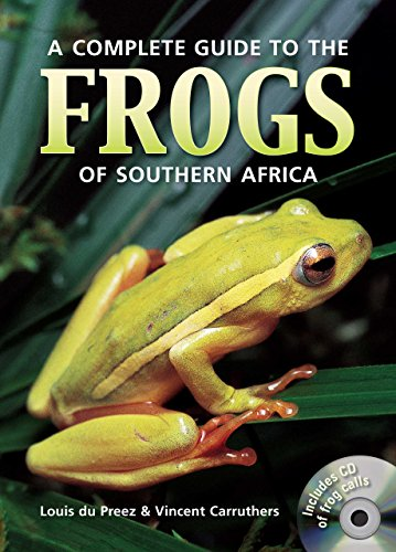 African Reed Frog - 8