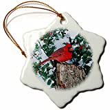 3dRose Danita Delimont - Cardinal - Northern Cardinal male on stump near China Holly in winter, IL - 3 inch Snowflake Porcelain Ornament (orn_250901_1)