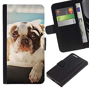 Apple (5.5 inches!!!) iPhone 6+ Plus , la tarjeta de Crédito Slots PU Funda de cuero Monedero caso cubierta de piel (Cute Dog - Boston Terrier)