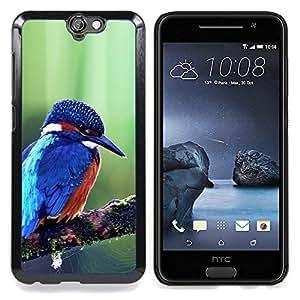 "Qstar Arte & diseño plástico duro Fundas Cover Cubre Hard Case Cover para HTC One A9 (Pájaro azul lindo Kingfisher Majestic"")"