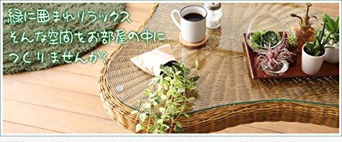 ラタン×スチール カフェ風ルームガーデンファニチャーシリーズ【Neith】ネイス セットF/テーブル B075XQ96KB