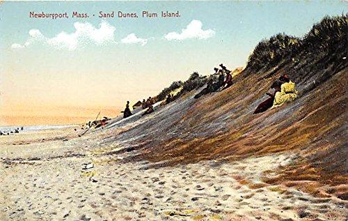Dune Plum (Sand Dunes & Plum Island Newburyport Massachusetts Postcard)