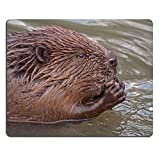 MSD Natural Rubber Gaming Mousepad IMAGE ID 19827277 Close up of eating beaver Castor fiber female