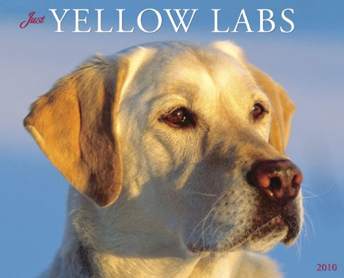 - Just Yellow Labs 2010 Calendar