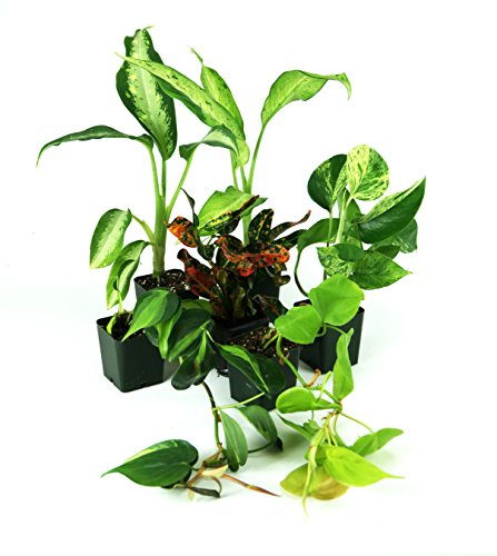 Large Crested Gecko Vivarium Plant Kit by Josh's Frogs (Image #1)