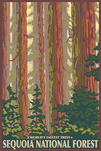 Sequoia National Forest, California - Redwood Trees (24x36 Giclee Gallery Print, Wall Decor Travel Poster)