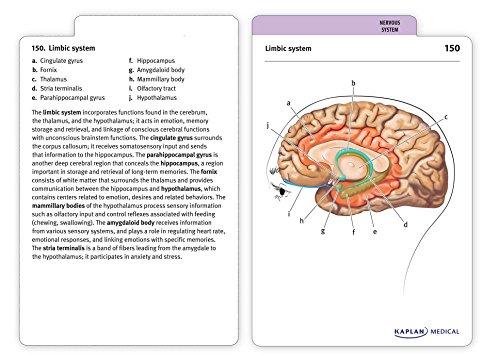 PDF] anatomy physiology workbook for dummies (28 pages) - anatomy ...
