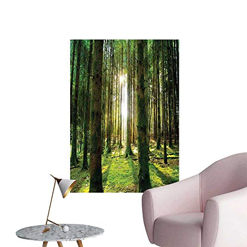 Forest Poster Sticker Scenic Scenery with Sunbeams in The Forest Sunny Summer Day Morning View Picture Living Room Wallpaper Green White W24 x H36 -