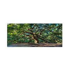 Angel Oak Charleston by Pierre Leclerc work, 16 by 32-Inch Canvas Wall Art