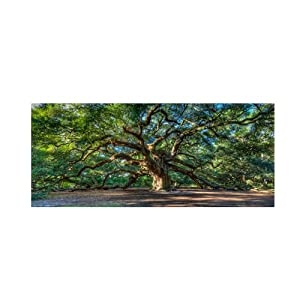 Angel Oak Charleston by Pierre Leclerc work, 16 by 32-Inch Canvas Wall Art