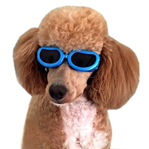 Alfie Pet by Petoga Couture - Larry Sun Glasses for Dogs and Cats - Color: Blue, Size: - Sunglasses Outfit