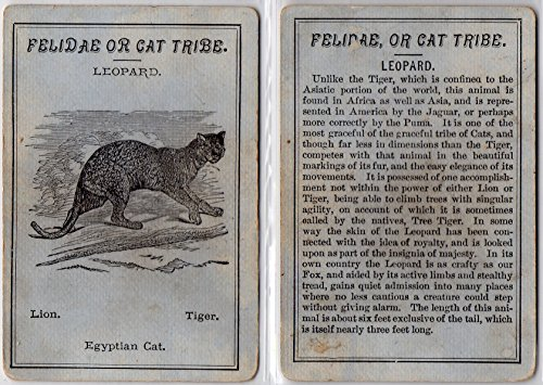 Leopard 1873 Ferrilude Game of Beasts Card (2) - West & Lee Game Co. (GOOD+)