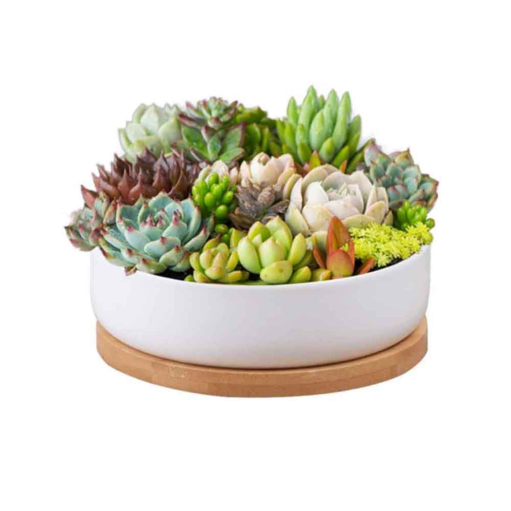 Succulent Planter Ceramic with Bamboo Tray,Y&M(TM) 6 inch Modern White Ceramic Round Design for Succulent Planter Cactus Pots Decorative Flower Holder Bowl Basin,Tub