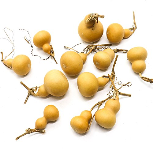 Buorsa 12Pcs Mini Good Looking Natrual Dried Calabash Gourd