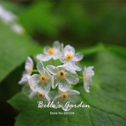 Amazon Com 100pcs Rare Exotic Blooming Plants Transparent Flowers