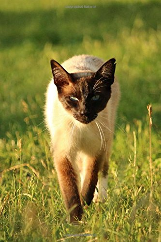 Read Online Siamese Cat Stalking You Journal: 150 Page Lined Notebook/Diary ebook