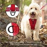 Kurgo Dog Harness | Car Harness for Dogs | Large