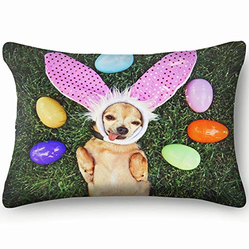 Authentic Photo Cute Chihuahua Rabbit Ears Animals Wildlife Easter Skin Cool Super Soft and Luxury Pillow Cases Covers Sofa Bed Throw Pillow Cover with Envelope Closure 1624 Inch
