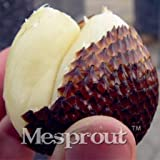 20 Seeds Salak Seed World Snakeskin Fruit Seeds Like Ginseng Fruit Very Delicious #32708626232ST