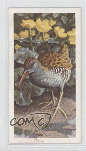 Water Rail (Trading Card) 1957 Brooke Bond Bird Portraits - Tea [Base] - With Address #38
