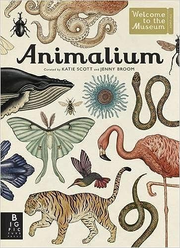 Image result for animalium