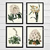 Botanical Print Set of 4 Antique Beautiful Redoute White Flowers Peony Narcissus Rhododendron Garden Nature Plants Home Room Decor Wall Art Unframed