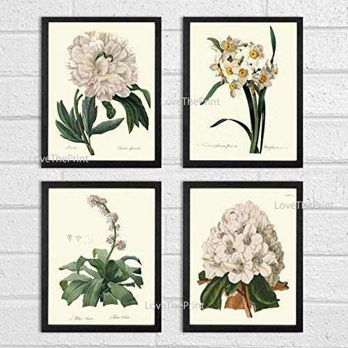 Garden Rhododendron - Botanical Print Set of 4 Antique Beautiful Redoute White Flowers Peony Narcissus Rhododendron Garden Nature Plants Home Room Decor Wall Art Unframed