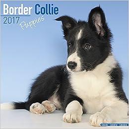 Border Collie Puppies Calendar 2017 Puppies Calendar Dog Breed