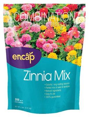 Ns Zinnia Flowers