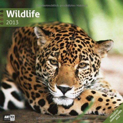 Wildlife 2013