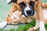 BEST PET SUPPLIES LLC urinary tract infection in