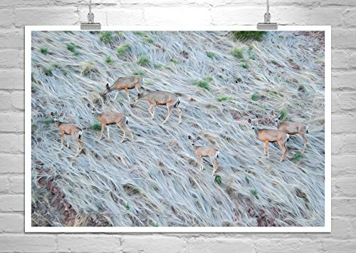 Wildlife Photography, Fine Art Print with Deer
