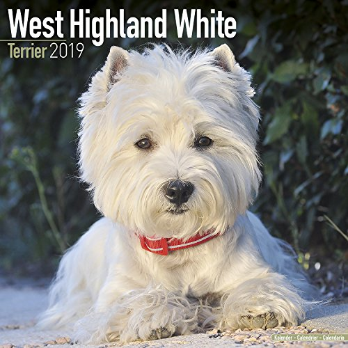West Highland Terrier Calendar - Dog Breed Calendars - 2018 - 2019 Wall Calendars - 16 Month by Avonside