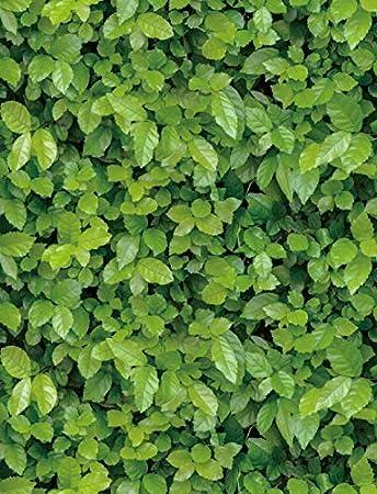 Jaamso Royals Vinyl Green Grass Self Adhesive Wallpaper 200 X 45 Cm Multicolor Self Adhesive Wallpaper Jr1020 200cm Amazon In Home Kitchen