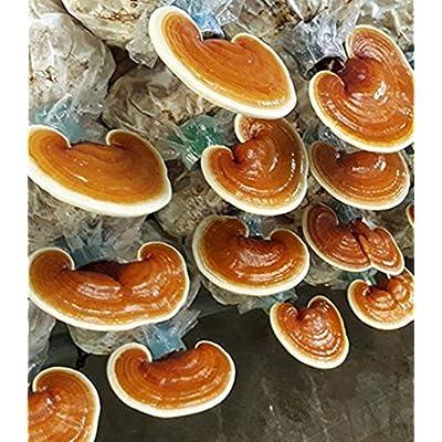 AchmadAnam - 50 Grams - Ganoderma lucidum Lingzhi Mushroom Sliced Dried. E11 : Garden & Outdoor
