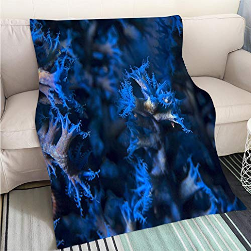 Breathable Flannel Warm Weighted Blanket Blue Coral Polyps Blaue Korallenpolypen Perfect for Couch Sofa or Bed Cool Quilt (Coral Star Polyp)