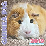 Guinea Pig 2019 Mini Wall Calendar