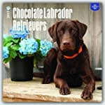 Chocolate Labrador Retrievers 2017 Sq...