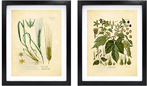 home & kitchen, wall art,  posters & prints  on sale, Ink Inc. Craft Beer Art Print – Hops and Barley Vintage Botanical Drawing – 8x10 Matte Unframed – Great Gift for Homebrewers and Beer Enthusiasts deals4