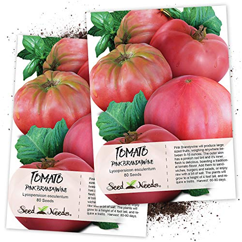 Seed Needs, Pink Brandywine Tomato (Lycopersicon esculentum) Twin Pack of 80 Seeds Each Non-GMO